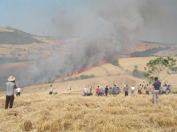 ۶۰ هکتار از گندمزارهای روستای نوچمن گرگان در آتش سوخت + تصاویر