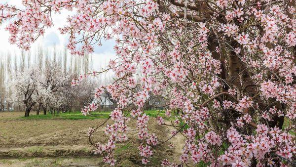 هوایی آرام و بهاری در اواخر تعطیلات توروزی