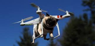 فیلم/ پیاده روی کرونایی سگ با پهپاد!