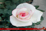 نمایشگاه گل و گیاه گرگان در لنز گلستان24(قسمت اول):