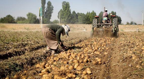 اعتراض به قیمت سیب زمینی در شورای اقتصاد