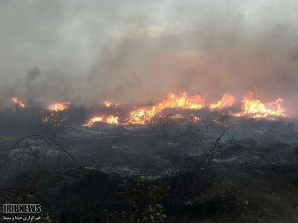 آتش سوزی در جزیره آشوراده مهار شد