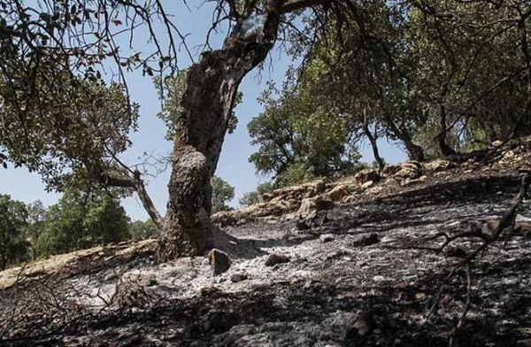 تزریق ۶۰ نیروی تازه نفس برای اطفا حریق پارک ملی/ آتش فعال نداریم
