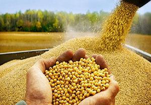 آغاز توزیع بذر سویا در گلستان