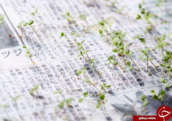 روزنامه ای که گیاه می شود+ تصاویر