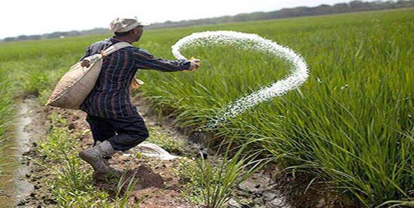 شوک کشاورزان گلستانی از افزایش ۵ برابری قیمت کود شیمیایی