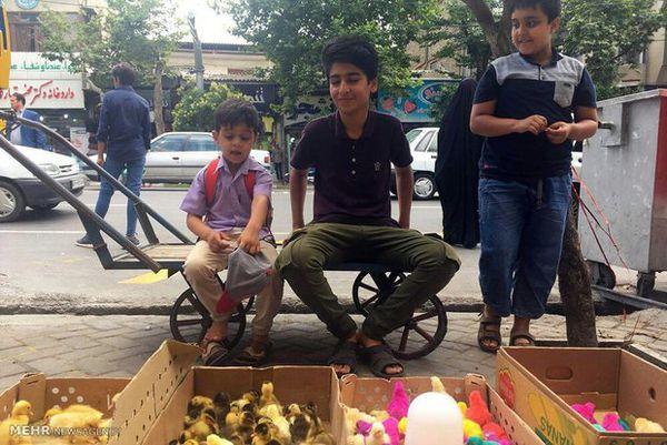 بحران کودکان کار استان گلستان؛ زخمی که هر روز عمیقتر می شود