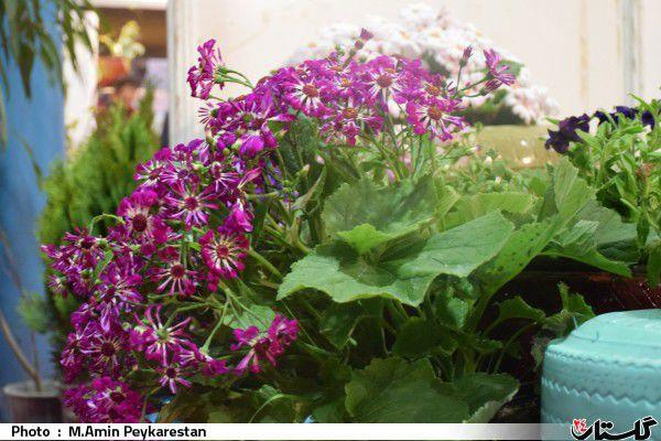 هفتمین نمایشگاه گل و گیاه و صنایع وابسته