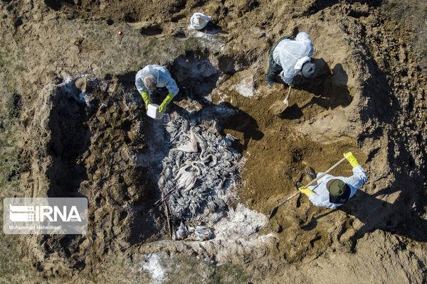 مرگ ۱۵ هزار پرنده مهاجر در میانکاله/خلیج گرگان لایروبی میشود