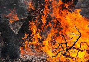 اطفا حریق در جنگل های شموشک و کردکوی در گلستان