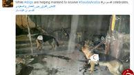 کاربران توئیتر جواب خوشحالی سعودی ها را دادند+تصاویر