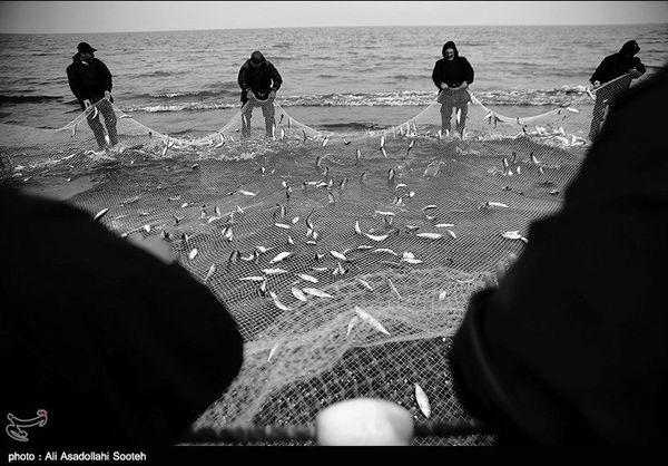 رشد ۱۸ درصدی صید ماهیان استخوانی در گلستان /فصل صید ماهیان استخوانی در گلستان آغاز شد
