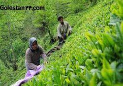 کشاورزانی که سرشماری عمومی نشده اند سه روز فرصت دارند!