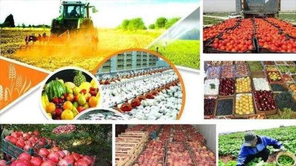 افزایش تولیدات کشاورزی بدون رفع موانع صادرات خطرآفرین است