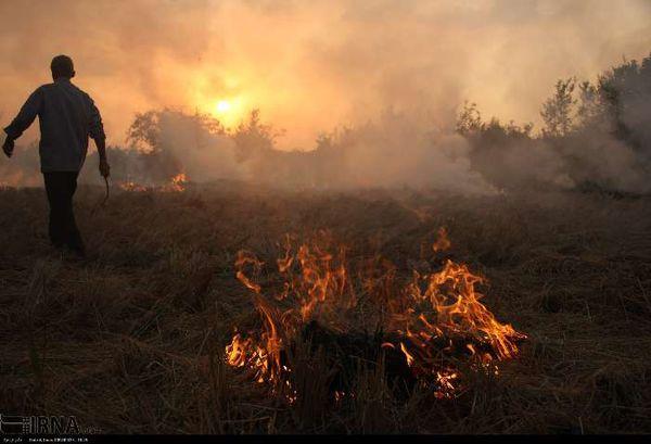 آتش زدن کاه و کلش زمین کشاورزی در گلستان