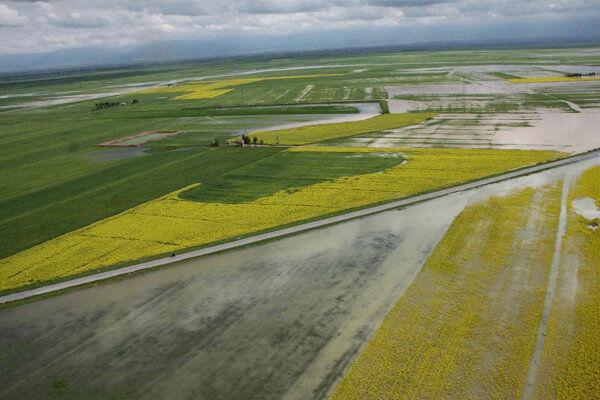 خسارت ۲۲۹ پرونده کشاورزان گمیشان پرداخت شد