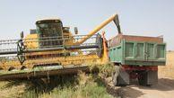 خرید تضمینی ۲۷۰۰ تن محصول کلزا از کشاورزان آق قلایی