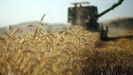 اعلام قیمت پیشنهادی گندم برای سال زراعی جدید