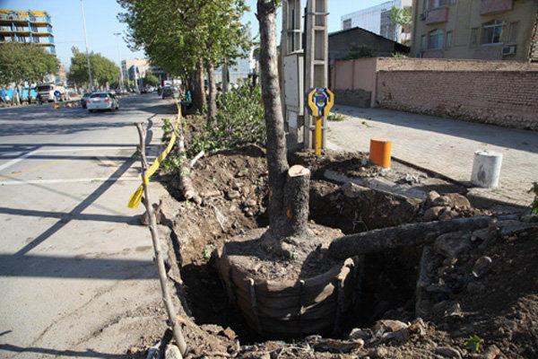 جابه جایی ۱۶۰ اصله درخت برای احداث تقاطع غیر هم سطح در گرگان