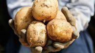 طنز تلخ قیمت تضمینی برای سیبزمینی گلستان