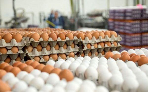 قیمت روز تخم مرغ در بازار ؟ (۹۹/۰۶/۰۴) + جدول