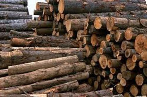 قاچاق چوب در گلستان