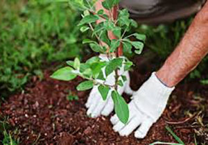 کاشت یک هزار اصله درخت در گرگان