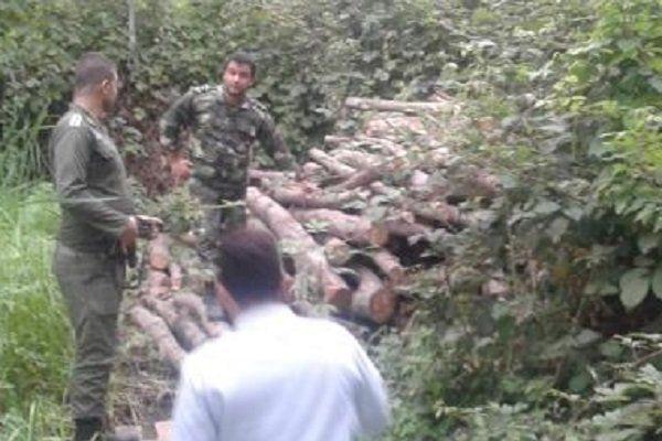 اخراج ۴۷۰ قُرقبان گلستانی/ ۴۰۰ هکتار جنگل سرخدار در معرض نابودی