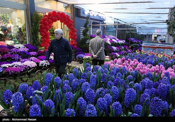 پایانه فروش گل و گیاه در گرگان راهاندازی میشود