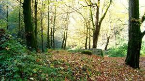جنگل کردکوی