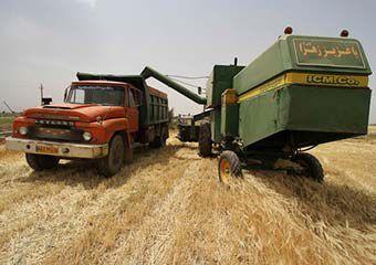 برداشت 95 هزار و 470 تن جو و 3 هزار و 575 تن کلزا از مزارع گمیشان