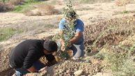 کاشت نهال گلدانی در مراتع «چپرقویمه» از سوی جوانان هلال احمر گنبدکاووس