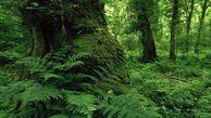 نیاز به ۲۰ دوربین تخصصی برای پایش جنگل های گلستان