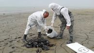 رکوردی غم انگیز از مرگ پرندگان در خلیج گرگان