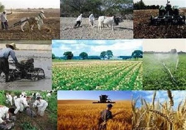"""اجرای طرح """"هر روستا، یک محصول"""" در استان گلستان آغاز شد"""